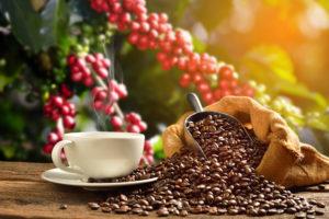historie pěstování kávy